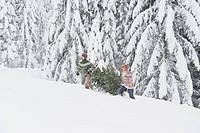 Austria, Salzburg, Young men carrying christmas tree in winter