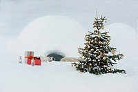 Austria, Salzburg County, Christmas tree and presents in snow in front of igloo (thumbnail)