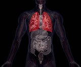 Biomedical illustration showing human internal organs with lungs indicated in red