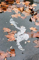 Germany, Frankfurt, leaves and paper in puddle