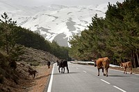 Sierra nevada Andalusia Spain