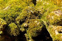 Moss growing on tree trunks