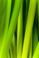 Detail of leek stalks