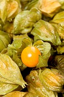 Detail of cape gooseberries