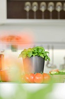 Basil and tomatoes in kitchen