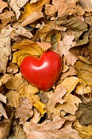 Heart among autumn leaves