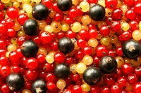 Berries of black red and white currant