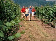 Group of Seniors Walking Across of Seniors Vineyard, Spain
