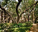 Shade trees in verdant grounds around apartment complex