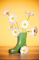 Bouquet of daisies in a boot