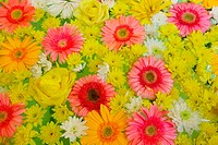 colorful flowers background pattern