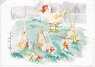 USA, Wisconsin, Chicken, watercolor