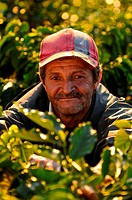 Nicaragua, Dipilto, Portrait of farmer collecting coffee in the mountainous Nueva Segovia