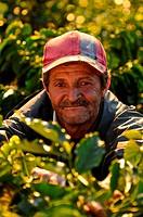 Nicaragua, Dipilto, Portrait of farmer collecting coffee in the mountainous Nueva Segovia
