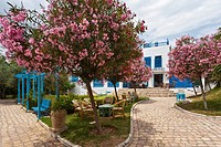 Tree blossoms in a small garden in Sidi Bou Said, Tunisia