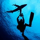 Scuba diver underwater photographing a Blue shark Prionace glauca