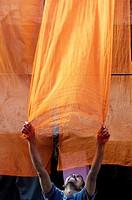 Drying saris  Jodhpur  Rajasthan  India.