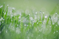 Dew on grass, selective focus, close up