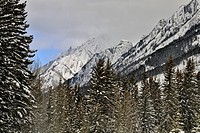 Fresh snow in the Bow Valley, Banff National Park, Alberta, Canada
