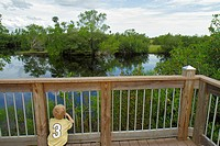 Florida, Naples, Everglades, Big Cypress National Preserve, Big Cypress Swamp Welcome Center, nature boardwalk, boy, looking, mangrove, water
