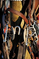 Polo bridles, harnesses