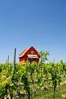 Vineyard cottage near Woerrstadt, Rhine-Hesse region, Germany, Europe