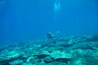 A woman in scuba gear diving underwater above a coral reef _ copyspace