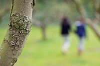 Close_up of a tree trunk with a woman and her daughter walking in an orchard in the background