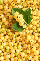 Berries of a white currant