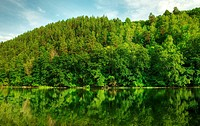 Picturesque forest and the river