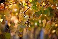 Vineyards in Rhineland Palatinate