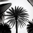 Silhouetted palm tree in the Central Business District in Singapore
