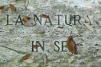 Italy, Toscana, Siena, San Giovanni d´Asso, Il Bosco della Ragnaia, open air nature art trail by Sheppard Craige