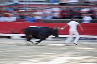 A bull chasing a man in an arena
