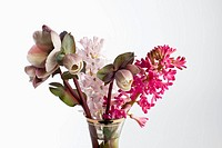 A bouquet of flowers, including Lenten roses Helleborus orientalis and hyacinth