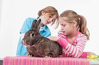 Girl and boy looking at rabbit (thumbnail)