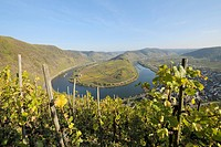 Germany, Rhineland_Palatinate, Moselle loop with town Bremm and vineyard