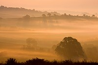 Mist shrouded Devon landscape at dawn near Crediton, England, United Kingdom, Europe