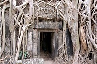 Ta Prohm, Angkor Archaeological Park, UNESCO World Heritage Site, Siem Reap, Cambodia, Indochina, Southeast Asia, Asia