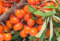Sea_buckthorn.
