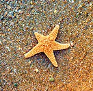 Starfish on sea coast