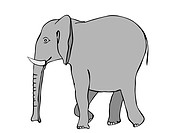 walking elephant