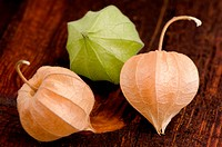 Physalis fruits closeup
