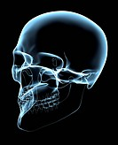 Human Skull _ X_Ray Oblique Projection