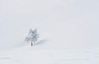 schnee in den alpen
