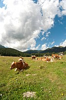 Meadows of Val Visdende, Italy