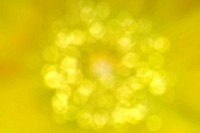 Circle yellow blur Background