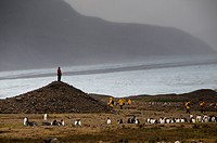 A woman stands atop a mound near king penguins and a glacier.