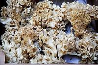 Abalone mushrooms at a farmers´ market
