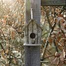 Bird nesting box on post amongst autumn leaves